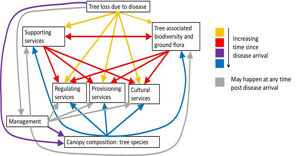 Diagram of the cascading effects of tree diseases on biodiversity and ecosystem services