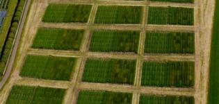 Variety mixtures field experiment on different soil cultivation treatments
